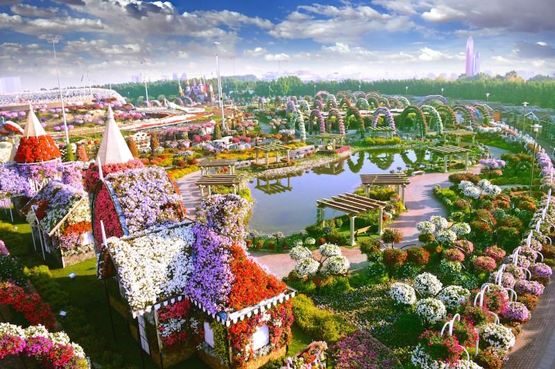 miracle garden 4