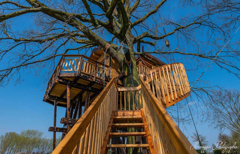 tree house cigno