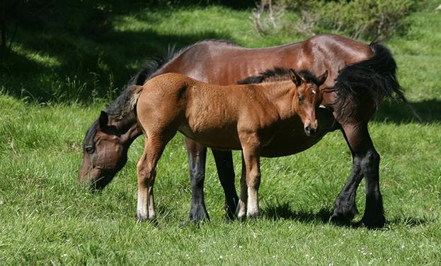 cavalli aveto ap
