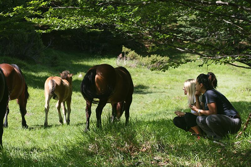 horsewatching ap ok