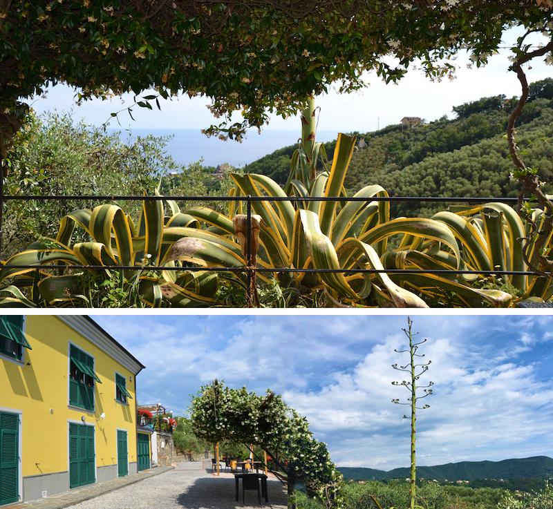 villa rosetta giardino 2